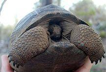 Tortoises / by Rebecca Raney