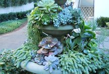 Grow Succulents/ Waterwise / grow succulents, cacti, water wise plants
