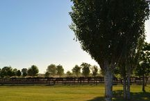 Polo Holidays / We have everything for you to come, stay and never leave.  Luxury accommodations, tasty regional gastronomy, outstanding polo fields and great polo horses. You will experience the best polo in Argentina. Play polo every day and night!