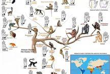 Science and Humor of Primates / http://babybaboons.webnode.hu/