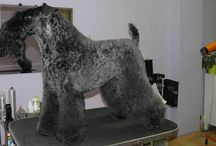 Cursos de peluquería canina