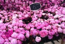 Пионы / Flowers