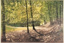 Etsen en schilderijen, foto s etc. / Werk van verschillende kunstenaars met als onderwerp de natuur
