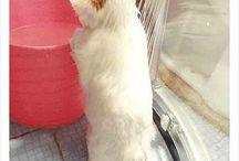 Munchin katt