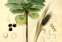 Exotic & Botanic art
