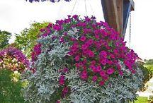 Hanging baskets. Outdoor container gardening: Planting a beautiful pot of flowers / Фотографии садовых композиций