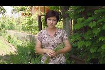 Огород борьба с вредителями и сорняками