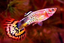 tropische vissen Juulke