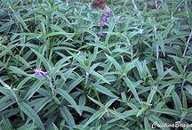 Plantas para composição de bordados