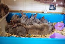 Bunnies & Rabbits / Bunnies and rabbits