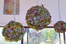 Flowers/Contained / by Mary Frydenberg