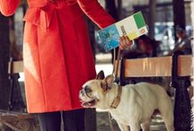 Frenchies / by Patricia Meyer; Independent Longaberger Consultant