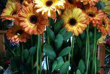 Centres florals - Centros florales - Flower arrengements