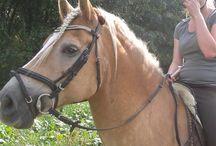 Kijk hem mijn knappe mannetje zijn / Mijn lieve pony