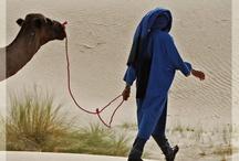 Morocco. Marokko.  / Dunes sahara Morocco