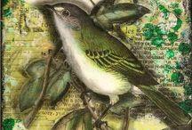 Bird images I like