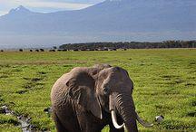 elephant ♥