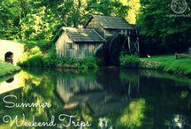 Jack Honey Summer Swarm / #SummerSwarm Instagram picture contest for Jack Daniels Tennessee Honey