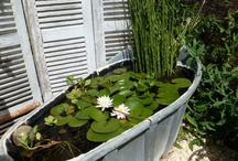 waterplants containers