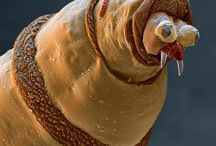 Photography : : Creatures • bugs • weird / Strange, real creatures, animals, bugs.