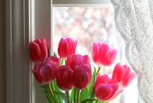 tulipan and flowers