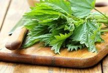 zdravé bylinkové recepty