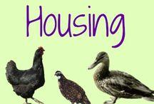 Homestead - ducks