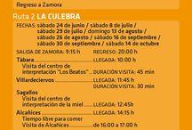 Déjate llevar por Zamora en bus 2017