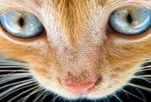 Cats Kittens Facebook Covers