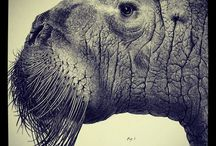 Favorite Walrus Photos / The are some of the favorite photos of the World Wide Walrus Web!