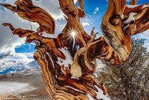 Trees Around The World