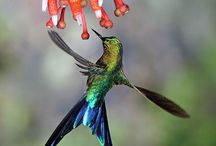 ❤️ HUMMINGBIRDS