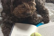 Pets read too! / So we're crazy about our animals and so are you. Can't help posing them in adorable shots as readers....