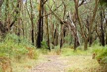 Parks of the Peninsula / Parks in the Mornington Peninsula, Victoria