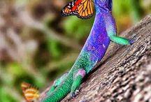 Anfibi colors