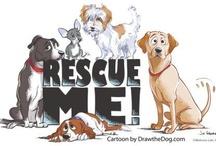Animal Rescue / by Elizabeth Amerman