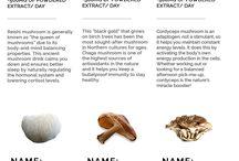 Medicinska svampar