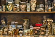 Cabinets, collections