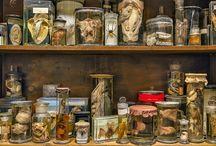 cabinet de curosités / Étrange, curieux, extraordinaire et ancien.
