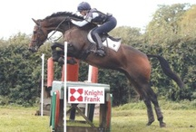Borough Free Flight (Freeby) / 16.2hh TB/Warmblood Gelding, Born 2007 Sire/Dam: Catherston Liberator/Sovereign Flight Owner and breeder Sally Bullen  Freeby is a very sweet natured horse with expressive floaty paces and a promising scopey jump. Out of the same dam as Borough Pennyz, he has come to the yard for some schooling to work towards his first competitive outings, which proved to be very promising. He completed in a very successful way 3 BE100 in 2012.