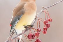Birds The Word