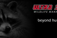 Ultra Safe Wildlife Management / This is the problem animal control division of Ultra Safe Pest Management Inc.