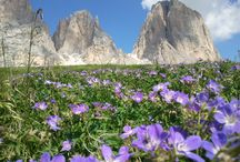 Alpi (Alps) / Dolomiti.........