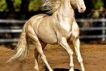 Σπάνιο Άλογο