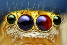 Jumping spiders (love them)