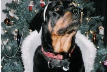For the love of Rottweilers / Dedicated to my best friend Dakota.  Love u and miss u always!!