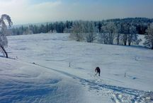 Raquettes # snowshoeing
