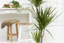 TODO - plante