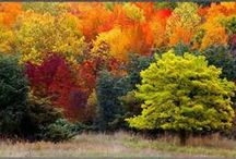 FALL Color Inspiration / I've always stated that Mother Nature is the original interior (or exterior as it were) designer!  So, why not get design inspiration from her & her creations?  I've gotten numerous color schemes from nature that I've implemented into a space.  And remember: GREEN is the new black!