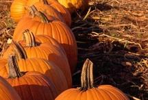 Fall harvest plants